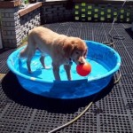 Cooper in the kiddie pool